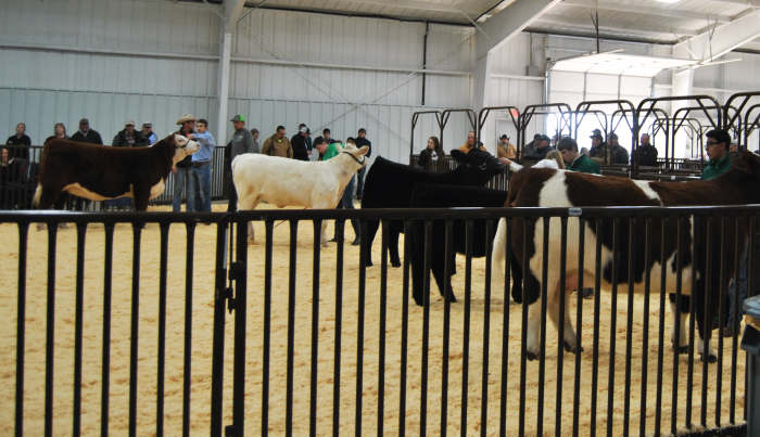 Harmon County show ring
